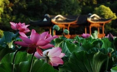 Sức Khỏe và Tuổi Thọ Con Người Qua Lăng Kính Phật Giáo